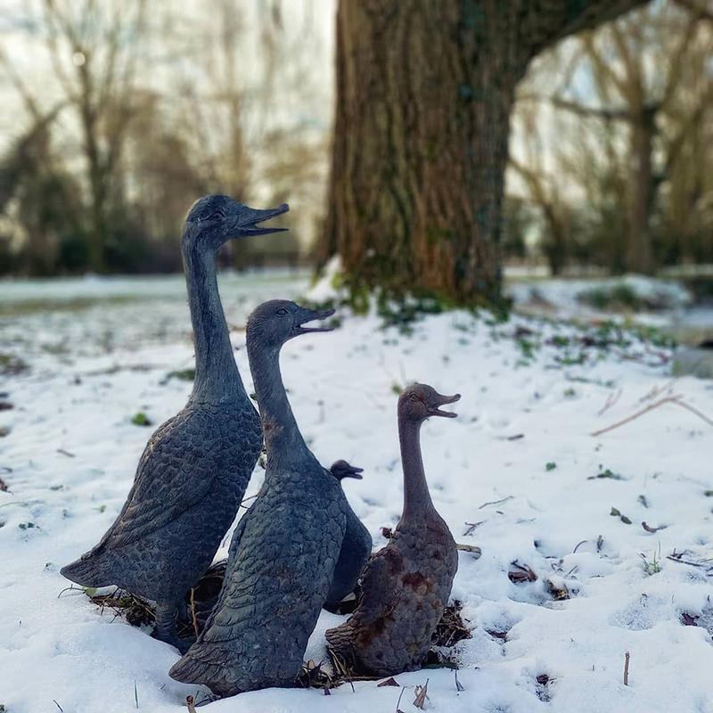 Ducks over frozen pond, Stambourne - Winter 2021