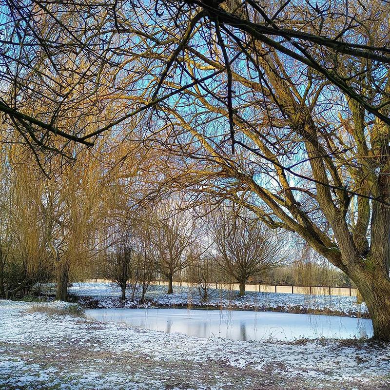 On Frozen Pond. Stambourne - Winter 2021