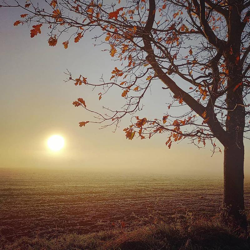 Frosty morning, Rockalls, Stambourne - Winter 2021