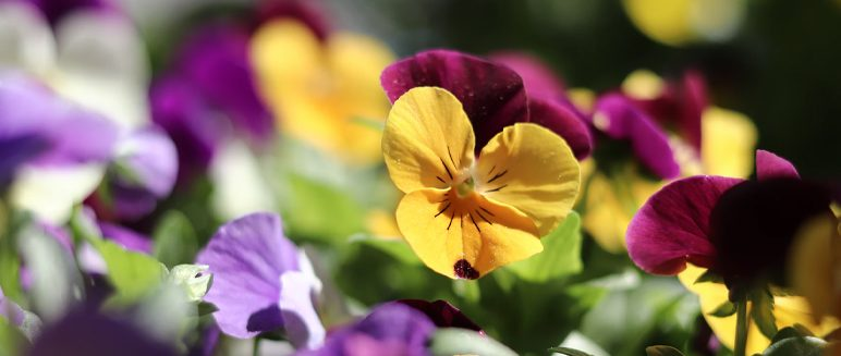 Open Day –  Plant sale Saturday 10th April 2021