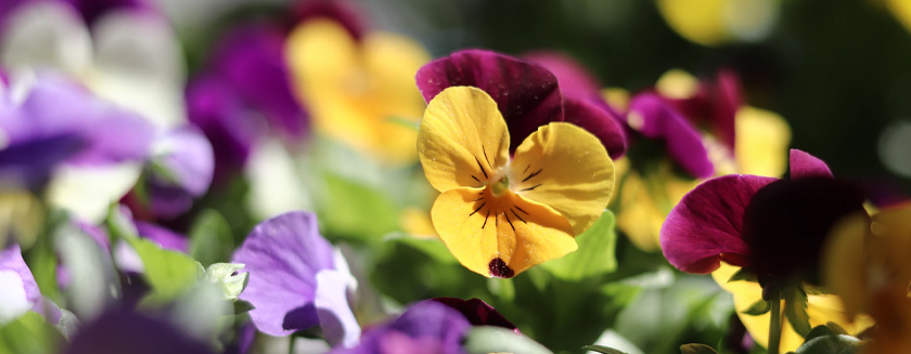 Stambourne Chapel - Plant sale 8th May 2021