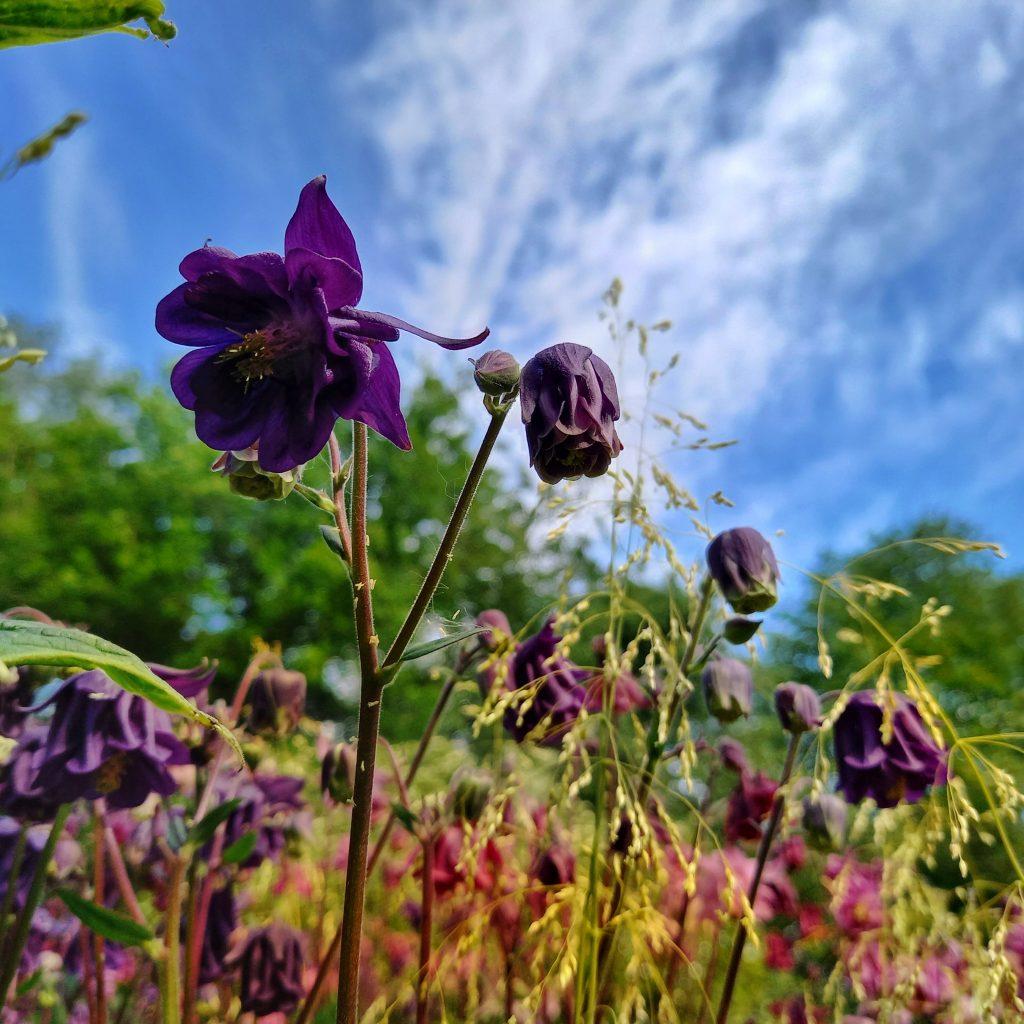 Spring in Stambourne